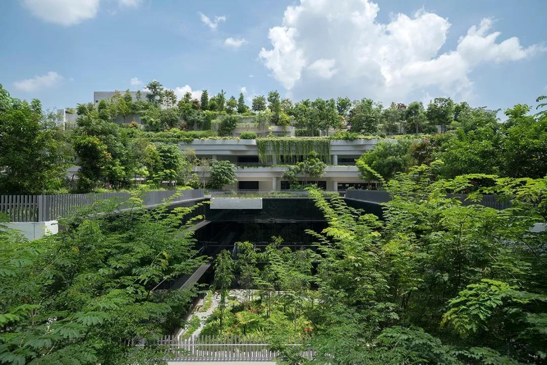 大家肯定会想到这个空中花园城市 ——新加坡 新加坡绿化覆盖率达到5图片